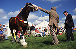Heavy horse class at UK country show, Cumbria, UK