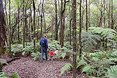A local man and a young boy with their dog hike along the native forest loop trail at Kalopa State Park, Hamakua Coast, Big Island.