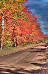 Country road lined by maple trees in full fall color.