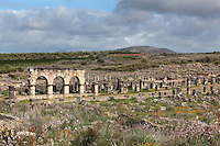 The Decumanus Maximus or Main Street, with the arches of the Portico lining the shop facades, and wildflowers in bloom, Volubilis, Northern Morocco. Volubilis was founded in the 3rd century BC by the Phoenicians and was a Roman settlement from the 1st century AD. Volubilis was a thriving Roman olive growing town until 280 AD and was settled until the 11th century. The buildings were largely destroyed by an earthquake in the 18th century and have since been excavated and partly restored. Volubilis was listed as a UNESCO World Heritage Site in 1997. Picture by Manuel Cohen