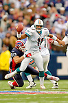 9 October 2005: Gus Frerotte (11), quarterback for the Miami Dolphins, is sacked by defensive end Chris Kelsay (90) of the Buffalo Bills at Ralph Wilson Stadium, in Orchard Park, NY. The Bills defeated the division rival Dolphins 20-14. ..Mandatory Photo Credit: Ed Wolfstein