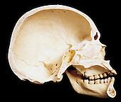 ha b skull 16
