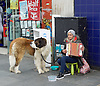 Lady with a big dog begging and playing accordion outside Brixton station, Brixton, London, Great Britain <br /> <br /> 24th April 2016 <br /> <br />  <br /> <br /> Photograph by Elliott Franks <br /> Image licensed to Elliott Franks Photography Services