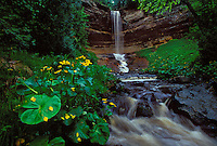 MARSH MARIGOLDS AND MUNISING FALLS IN PICTURED ROCKS NATIONAL LAKESHORE IN MUNISING, MICHIGAN.