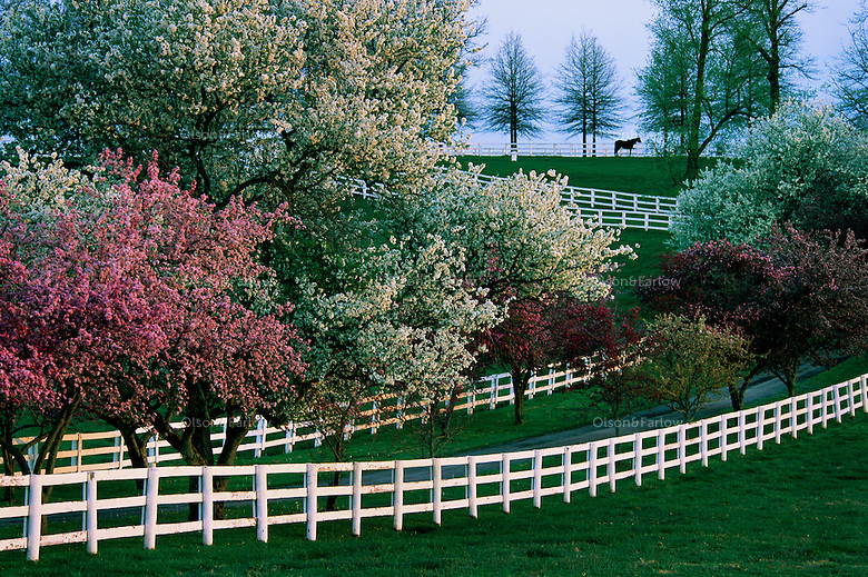 Flowering Trees In Full Bloom Randy Olson And Melissa Farlow