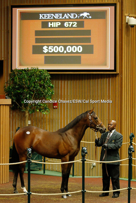 September 16, 2015: BATTLE JOINED  Hip 672 War Front - Strike The Bell filly consigned by Lane's End.  Candice Chavez/ESW/CSM