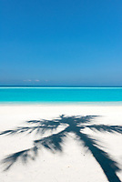 Late morning light on a clear day casts the shadow of a palm tree on this Maldivian beach.
