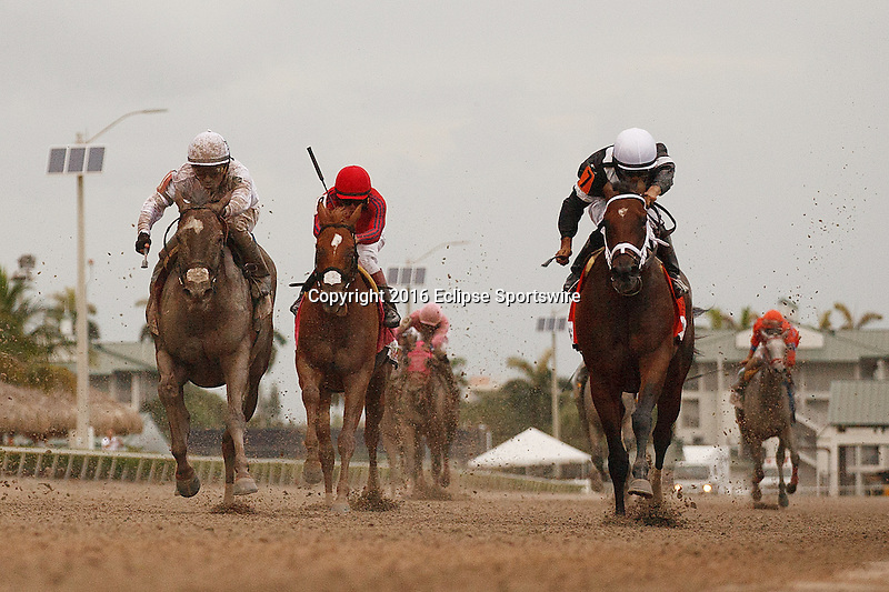 HALLANDALE BEACH, FL -JULY 02:   <br /> #7 Spelling Again (inside with white bridle) ridden by ridden by jockey Luis Saez wins the 2016 Princess Rooney Sprint (G2) over #1 Cali Star (outside) at Gulfstream Park on July 02, 2016 in Hallandale Beach, Florida. (Photo by Arron Haggart/Eclipse Sportswire/Getty Images)