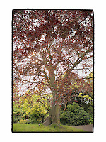 Regents Park Red Tree- London, UK - Artist Designed Custom Border