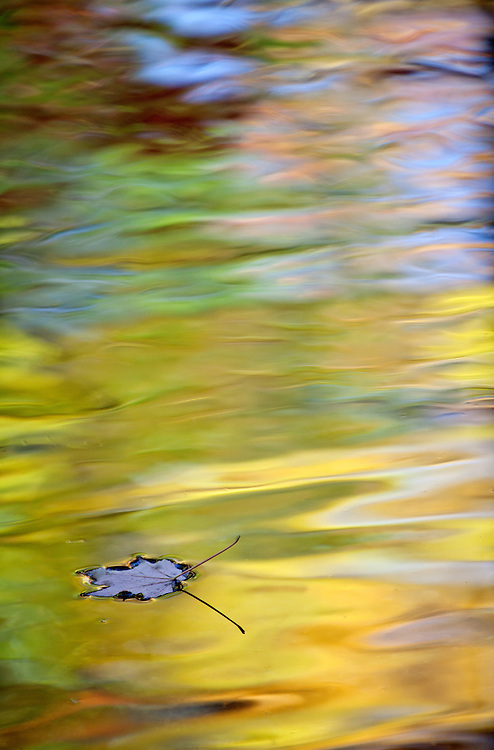 A leaf floats atop reflections in Jordan Stream in Acadia National Park, Maine, USA