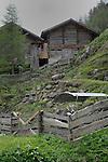 Grey cows in rocky field, Tirol, Austria.
