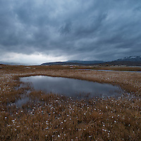 Small pond and marsh near lake Tyin, Oppland, Norway