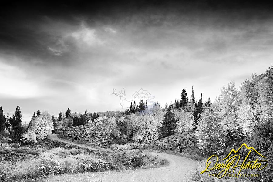 Windy Backroad, autumn, sunrise, aspen trees,  Jackson Hole, Wyoming