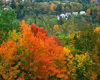 Hillside of trees and homes near Saint Johnsbury Vermont