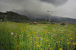 Spring meadows and cow sheds,Imst district, Tyrol/Tirol, Austria, Alps.