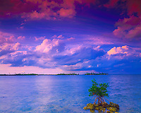 Evening Clouds over Lone Mangrove & Islands in Spring, Convoy Point Biscayne Bay, Biscayne National Park, Florida