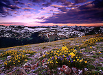 Wildflowers bloom in the Rocky Mountain National Park, Colorado