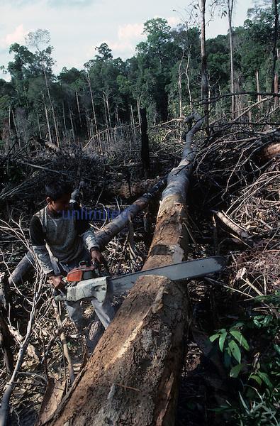 Indonesian Rainforest being clearcut, Jambi, Sumatra.