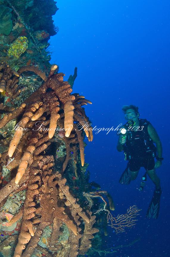 Sponge and diver .Vertigo in Annaly Bay.St. Croix, US Virgin Islands