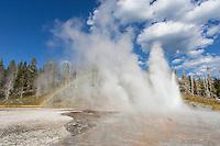 Grand Geyser in the Upper Geyser Basin of Yellowstone ereupting
