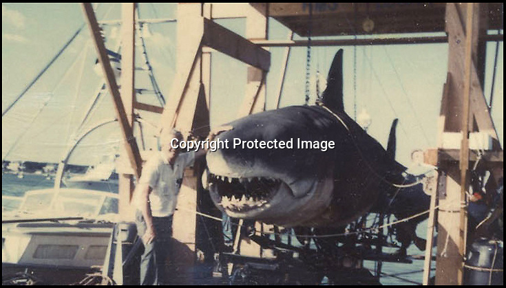 BNPS.co.uk (01202 558833)<br /> Pic: NateDSaunders/BNPS<br /> <br /> ***Please use full byline***<br /> <br /> A technician with one of the huge mechanical dummy sharks in a break from filming. <br /> <br /> Rare behind-the-scenes photographs taken on the set of the cult movie 'Jaws' has surfaced after 40 years.<br /> <br /> The 75 pictures include ones of star Roy Scheider, who played shark-hunting police chief Brody in the classic 1975 film, and director Steven Spielberg.<br /> <br /> There are several snaps of the giant mechanical rubber shark that wreaked terror on the fictional seaside resort of Amity.<br /> <br /> It is depicted being hoisted in the air and moved into position as well as sat in a dry dock during a break in the filming.