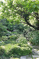 A well-stocked, lush garden with a paved path leading through the plants on either side. The various flowers and shrubs, provide a contrasting variety of leaf shapes, textures and greens.
