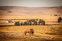 Western Scenes