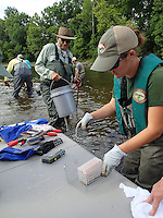 NWA Democrat-Gazette/FLIP PUTTHOFF<br /> Christy Graham (right) trout program coordinator with the Arkansas Game and Fish Commission, gets containers of eggs ready June 13 2015 for placing in the stream bed.