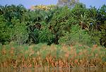 Papyrus marshes, Okavango Delta, Botswana