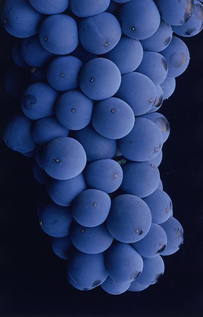Cabernet grapes