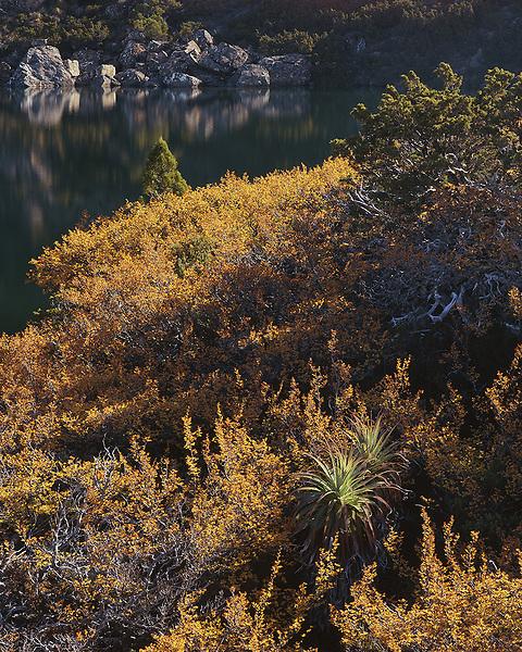 Autumnal Nothofagus