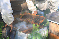 The hives are inspected for the migration. The strongest colonies will be brought to the islands.