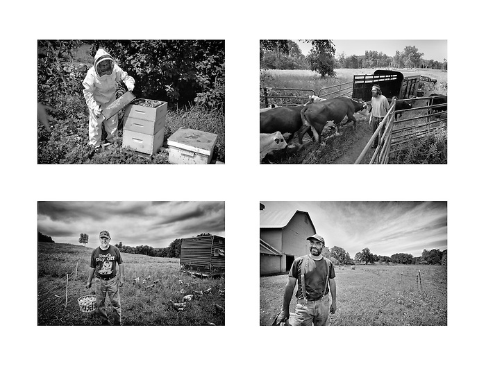A photographic composite of beef,chicken and bee farming at Lowland Farms in Warwick, New York