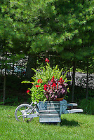 "Garden cart antique rustic weathered ornament container garden with patriotic flag ""Old Glory"" sign, ferns, celosia, pelargonium, on lawn under Pinus strobus white pine tree"