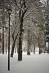 Lamp post stands among the trees in the snowed over park in Coeur d'Alene.