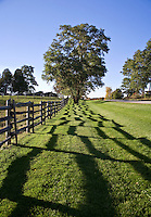 A four rail, split rail fence casts an abstract shadow  on the ground below.