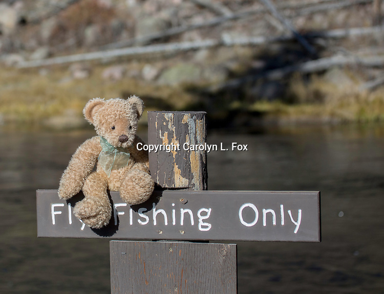 The stuffed bear known as Little Bear has fun in Yellowstone National park.