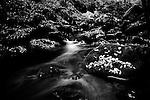 Stream flows through wooded valley in Calderdale, Yorkshire, UK, Long Exposure