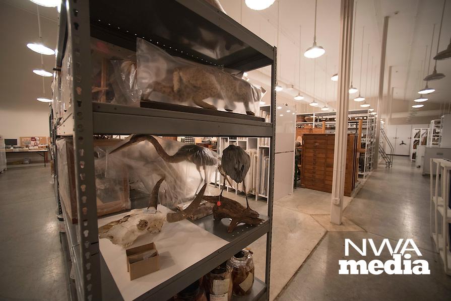 Northwest Arkansas Democrat Gazette/SPENCER TIREY Stuffed animals as well as skulls and skeletons set on shelves at Univserity of Arkansas archeology departments archive in Fayetteville Friday, February 26, 2016.