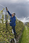 Foto: VidiPhoto<br /> <br /> SLIJK-EWIJK - Fruitteler Henk Veens uit Slijk-Ewijk in de Betuwe controleert en test dinsdag de spuitkoppen van zijn beregeningsinstallatie. De komende twee nachten wordt vorst aan de grond verwacht en om te voorkomen dat de (bloesem)knoppen bevriezen, wordt er beregend. Het water om de knoppen bevriest dan en vormt zo een beschermlaag tegen droge kou. Droge vorst is funest voor de appels- en perenknoppen. Veens heeft 22 ha. fruit, voornamelijk appels. Zolang het niet harder vriest dan -7 graden Celsius kan de bloesem nog beschermd worden. Bij temperaturen daaronder is de kans groot dat ook beregenen niet meer helpt en er vervolgens geen vruchten aan de bomen komen.