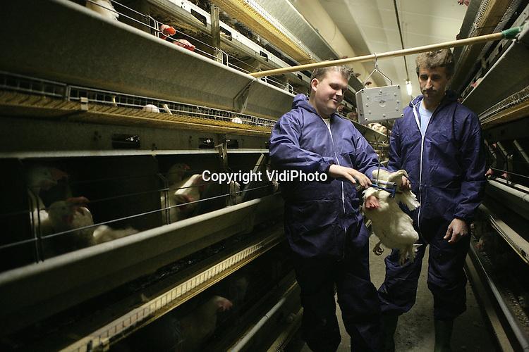 Foto: VidiPhoto..BARNEVELD - Pluimveevoorlichter Henno van den Bruinhorst van Rijnvallei bij pluimveehouder Jan Noorlander uit Barneveld.