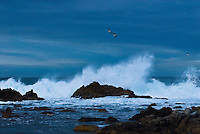 &quot;BACK TO SEA&quot;<br />