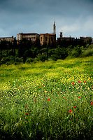 Wild flowers and poppies growing in the valley beneath Pienza, village in Val d' Orcia, Tuscany, Italy.  Unesco World Heritage Listed Site