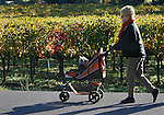 Went you get a dog with short legs and you want to pick up the pace on your daily walks, you might try strolling like this master thought of in Yountville, California.