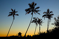 Beach & surf lifestyle photos - Lifeguard tower & palm trees in silhouette - Gold Coast, Australia