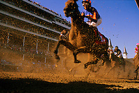 Thoroughbreds thunder down the track into the first turn in front of the infamous twin spires of Churchill Downs racetrack in Louisville, Kentucky. The Kentucky Derby, first held in 1875, is the most famous two minutes in horse racing.