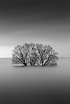 Tree partially submerged, Lake Biwa, Japan<br />