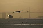 The sun rises over San Francisco skyline seen from the shores of Sausalito, California.