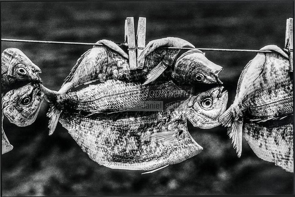 Europe, Espagne, Iles Canaries, Lanzarote:  La Caleta de Famara : Poisson séchant au port  // Europe, Spain, Canary Islands, Lanzarote: La Caleta de Famara: Fish drying in the harbor