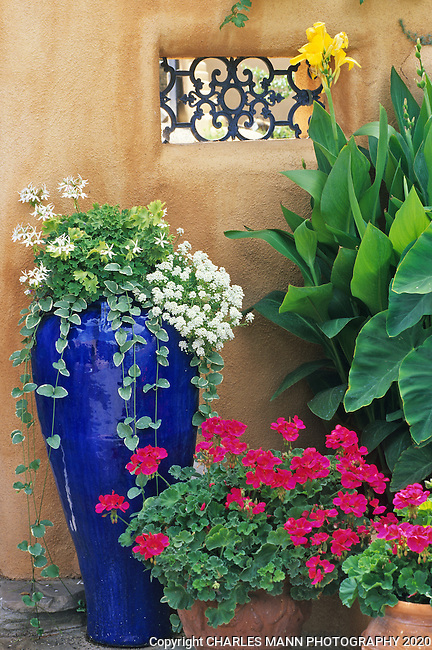 Susan Blevins of Taos, New Mexico, created an elaborate home garden featuring containers, perennial beds, a Japanese themed path and a regional style that reflectes the Spanish and pueblo architecture of the area. A tall blue ceramic vase makes a contrasting counterpoint to a red geranium agains a soft beige stuccoed adobe wall.